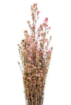 Fiori rosa secchi isolati su priorità bassa bianca.