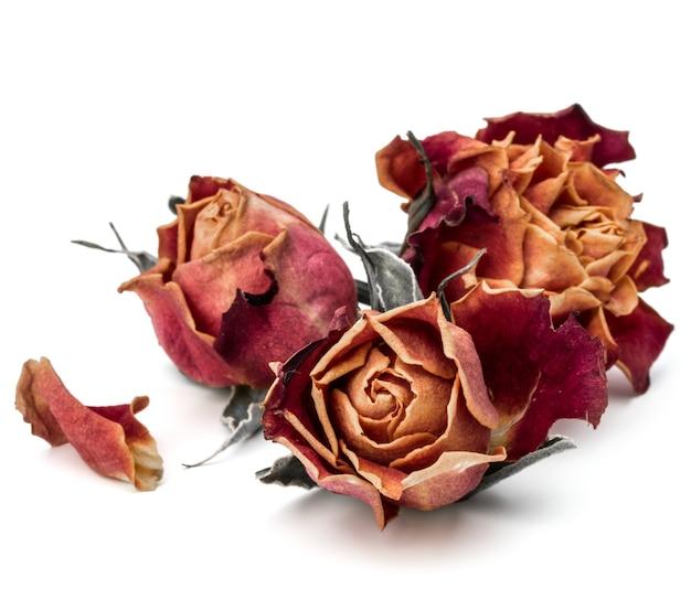 Testa di fiore rosa secca isolata sul ritaglio di sfondo bianco