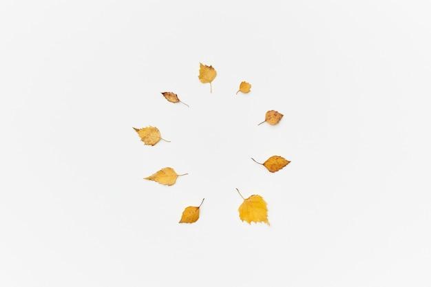Foglie autunnali gialle secche nel cerchio isolato su bianco, flatlay