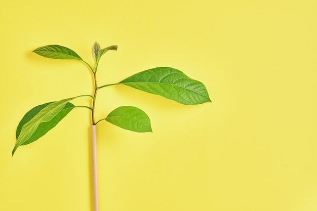 Tubi per bere in carta e amido di mais, materiale biodegradabile e bicchieri di carta ecologica con foglie di germogli verdi su sfondo di colore giallo tendenza 2021. zero rifiuti e concetto senza plastica. vista dall'alto.
