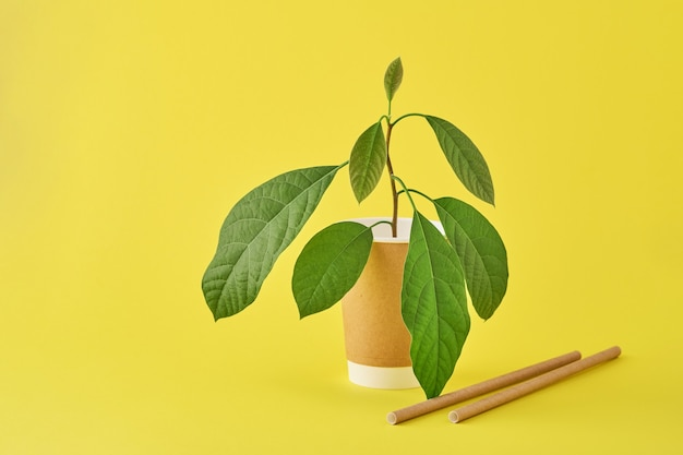 Tubi per bere in carta e amido di mais, materiale biodegradabile e bicchieri in carta ecologica con germoglio