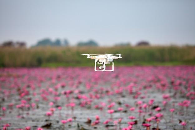 Drone aereo in bilico sul lago di loto rosa.