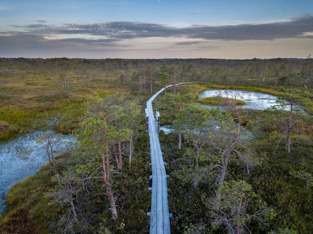 Drone foto di brughiere colorate in estate alba con un percorso di legno attraverso di essa