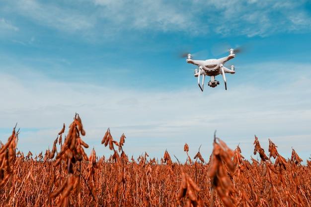 Drone quad elicottero sul campo di mais verde