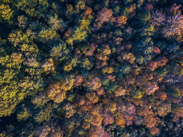 Vista drone delle cime degli alberi colorati