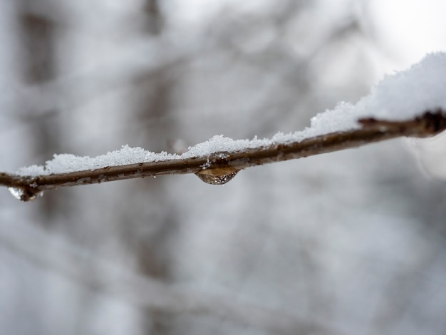 Una goccia d'acqua ghiacciata su un ramo durante il giorno nella foresta. paesaggio invernale sfocato sullo sfondo