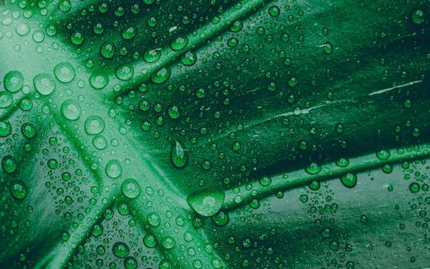 Goccia acqua sulla trama verde della foglia, pianta tropicale