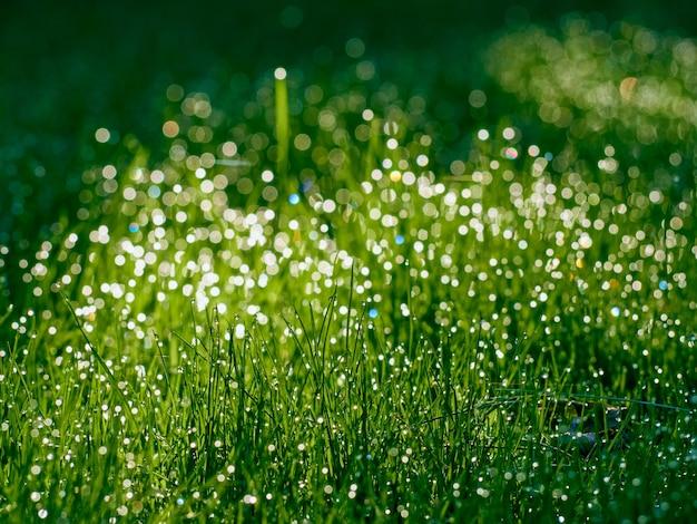 Gocce di rugiada sull'erba sfocate