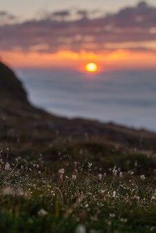 Gocce di rugiada sull'erba brillano al tramonto