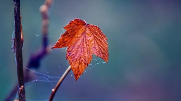 Foglia d'autunno secca su un blu scuro dark