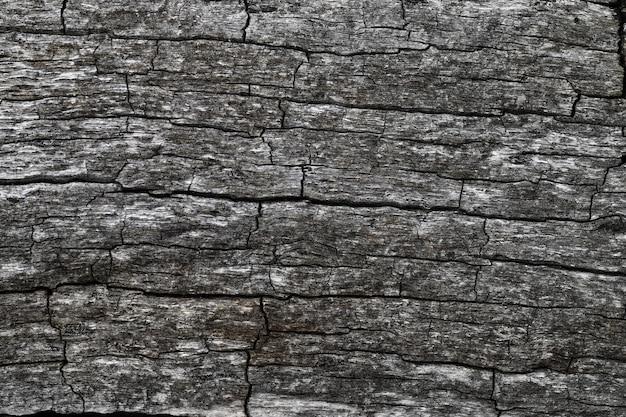 Corteccia secca del tronco di faggio
