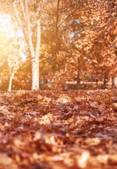Foglie secche arancioni e gialle brillanti che volano in aria in un parco autunnale sotto i raggi del sole della sera, parco autunnale di novembre con alberi, bellissimo sfondo