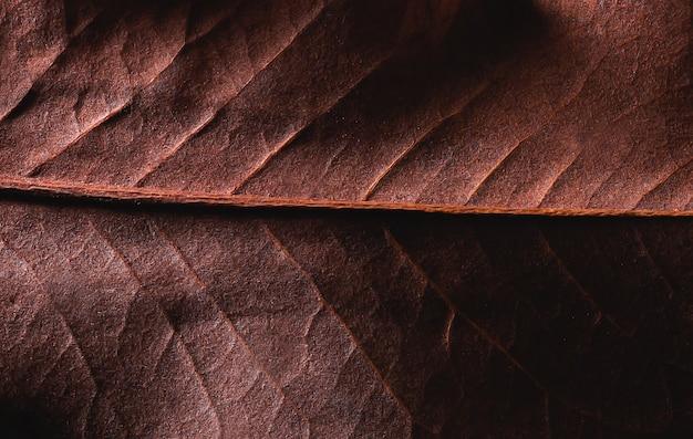 Fondo marrone asciutto di struttura della foglia