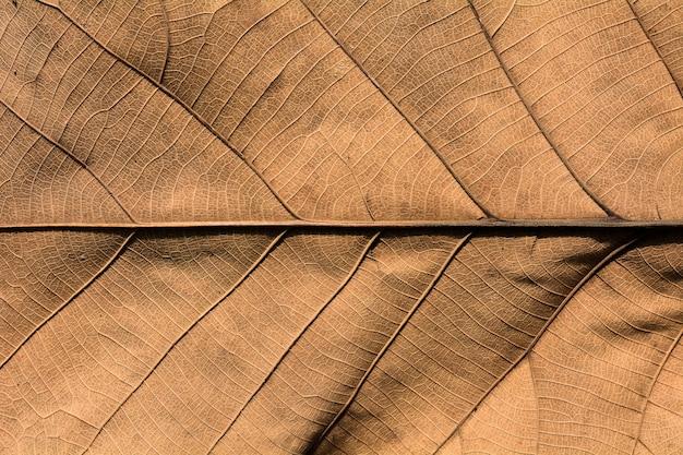 Texture di foglie secche marroni