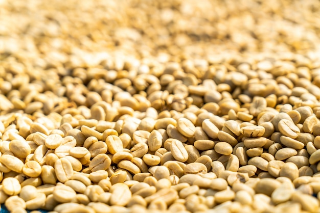 Chicchi di caffè secchi con luce solare