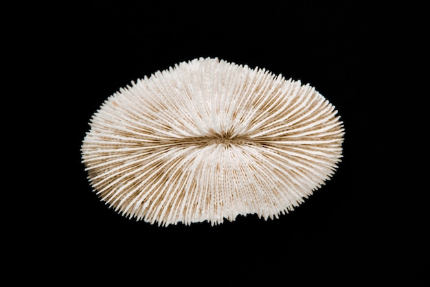 Corallo secco isolato su sfondo nero