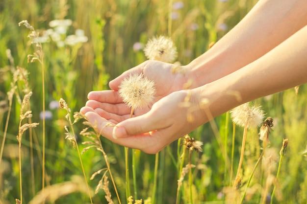 Dente di leone soffice asciutto in mano di un bambino, spazio di erba e fiori di prato selvatico estivo