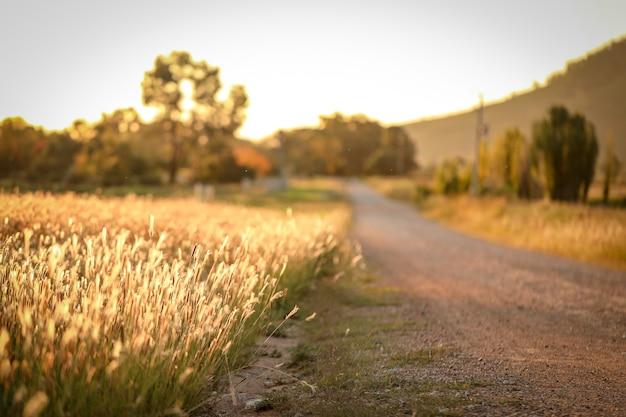 Erba secca accanto a una strada di campagna in australia
