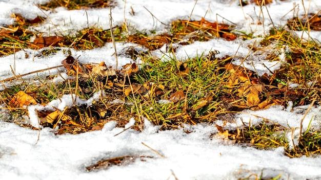 Erba secca e foglie sotto la neve durante il disgelo