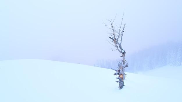 Una pianta di larice secca da sola nella neve