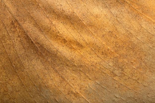 Modello di struttura del fondo della foglia asciutta e superficie della foglia autunnale marrone asciutta con macro botanica delle vene