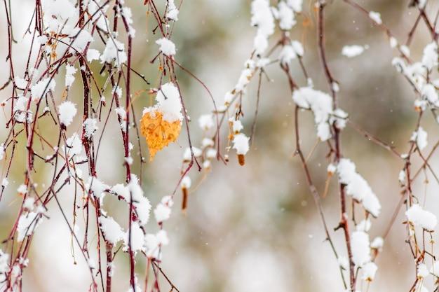 Foglia secca su un ramo di betulla ricoperto di neve_