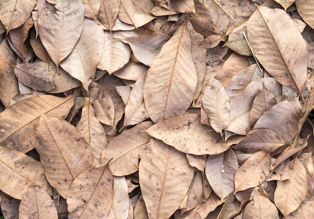 Asciughi le foglie sul fondo di autunno del pavimento