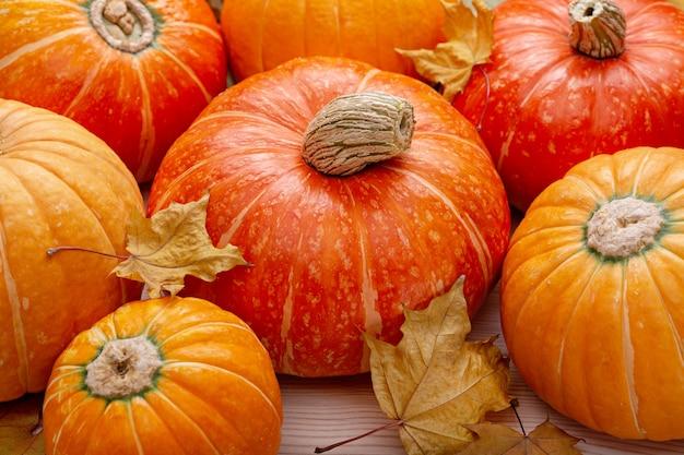 Foglie di acero secche e zucche arancioni mature.