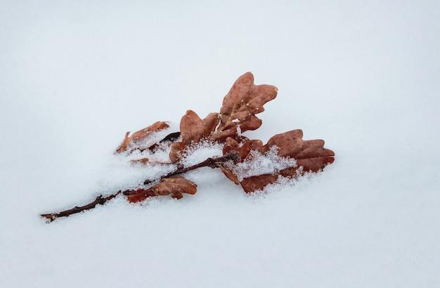 Foglie di quercia secche sulla neve in una gelida giornata invernale