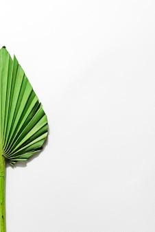 Foglia di palma secca su carta bianca con sfondo spazio copia