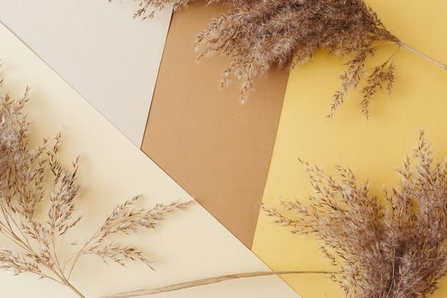 Canne secche dell'erba di pampa contro il marrone terroso, l'oro, il beige, il fondo geometrico della carta bianca. minimal, elegante, concetto di tendenza. lay piatto, vista dall'alto, copia spazio. colore di tendenza 2021.