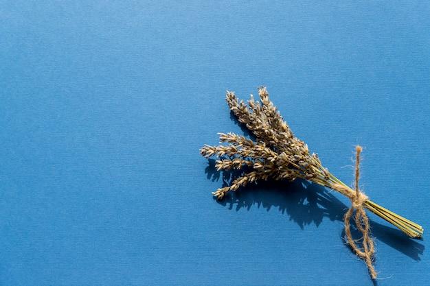 Fiori e piante selvaggi urgenti asciutti isolati su fondo blu.