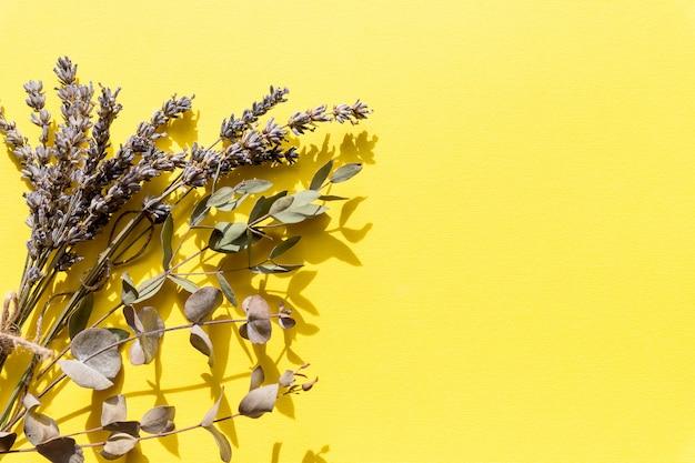 Fiori e piante selvaggi urgenti asciutti isolati su fondo giallo.