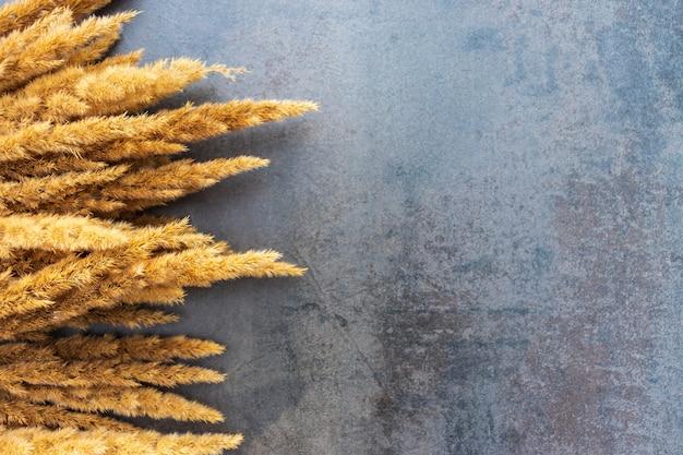 Canna secca e un ramo sottile e grazioso su uno sfondo nero con texture. erba di canna dorata. sfondo naturale astratto in colori monocromatici neutri. concetto minimalista e alla moda. copia spazio.