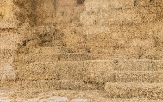 Pagliaio di riso secco in falciatura