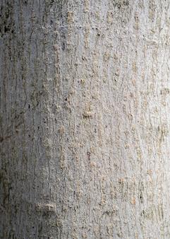 Priorità bassa secca di struttura della corteccia di albero. sullo sfondo della natura. fondo rustico di struttura della corteccia di albero per il disegno con lo spazio della copia