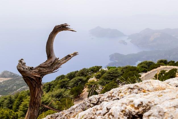 Albero secco sulla strada di montagna