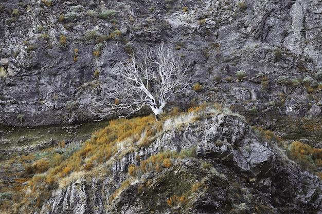 Un albero secco nelle montagne di madeira in portogallo
