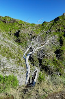 Albero asciutto e valle rocciosa del madera portogallo