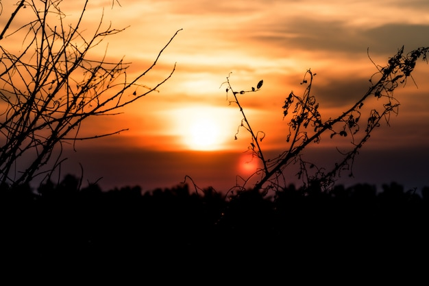 Albero asciutto senza le foglie nell'inverno contro il fondo arancio del paesaggio del cielo di alba del tramonto il bello