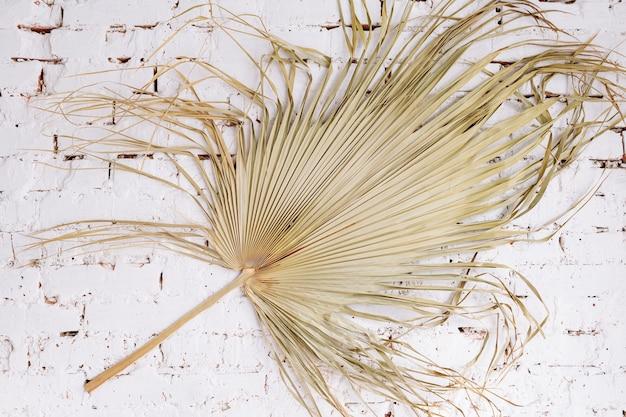 Foglia di palma esotica tropicale asciutta sul fondo del muro di mattoni bianco. composizione estetica con motivo floreale minimalista, vista dall'alto piatta. concetto di ora legale.