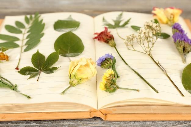 Asciuga le piante sul quaderno su fondo di legno
