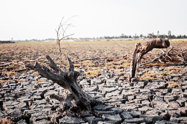 Boschi asciutti su terreno arido.