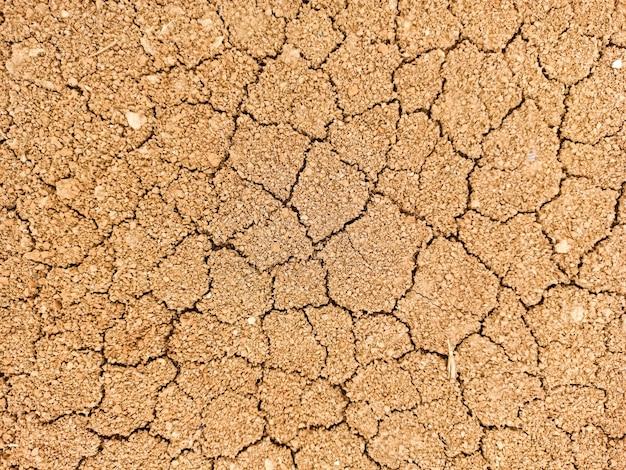 Sbadigli secchi nelle crepe, riscaldamento globale, ecologia.