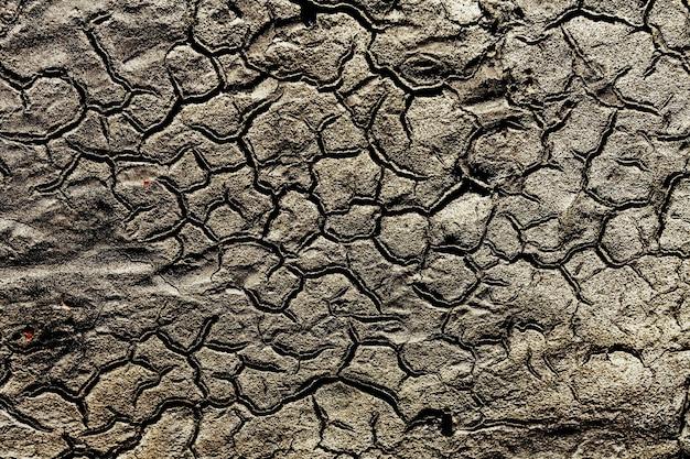Terre aride nel deserto