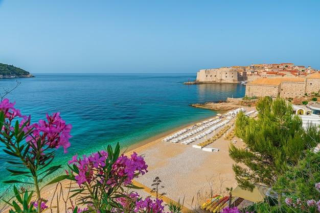 Città vecchia di dubrovnik con spiaggia sabbiosa di banje e fiori sul mare adriatico in croazia, europa. destinazione per le vacanze estive