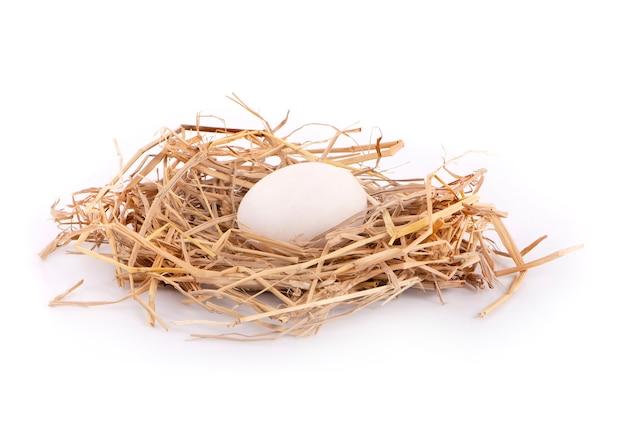 Uova di anatra isolate su superficie bianca.