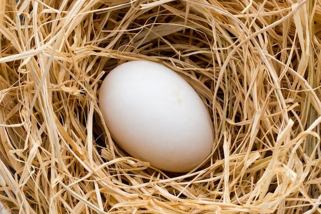 Nido di uova di anatra, simbolo di pasqua di primavera.