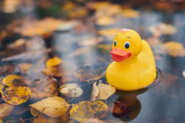 Giocattolo di anatra in autunno pozzanghera con foglie. simbolo d'autunno nel parco cittadino. fairweather o concetto di tempo nuvoloso.