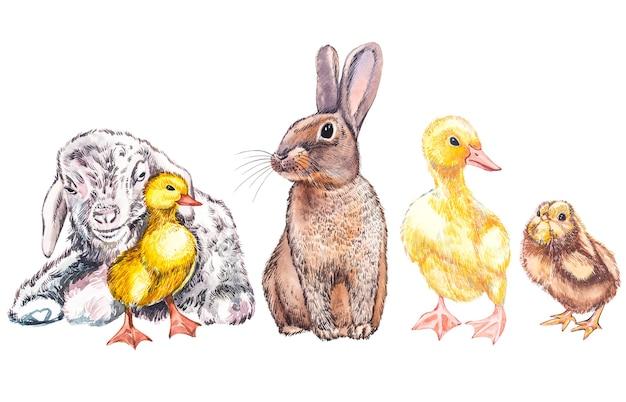 Illustrazione dell'acquerello di anatroccolo, capra, pulcino carino e coniglio